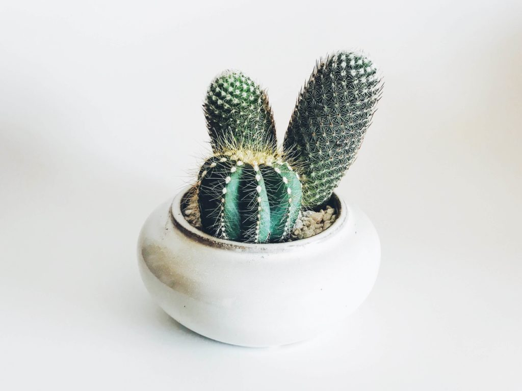 cactus for your desk