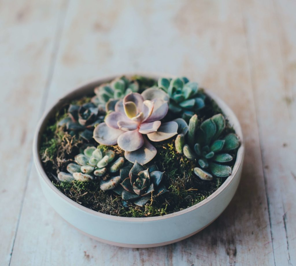 succulents to care for